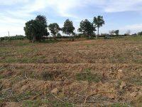 ขายที่ดิน จอมบึง ราชบุรี 19 ไร่ 1 งาน